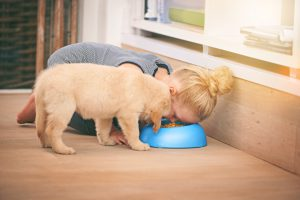 An adorable little girl sharing a bowl of food with her puppy at homehttp://195.154.178.81/DATA/i_collage/pi/shoots/783492.jpg