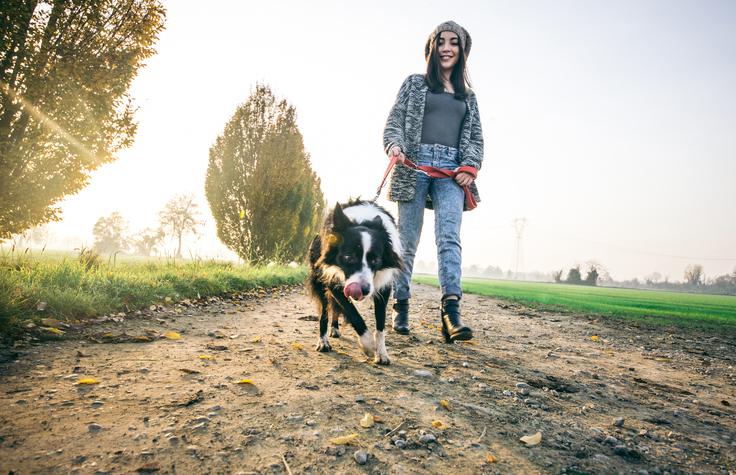 Jännittäviä ja erilaisia harrastuksia koiran kanssa